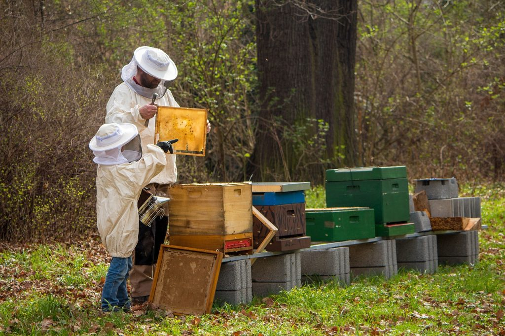 beekeeper, bees, young